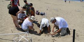 Οι χελώνες του Ακάμα: Ένα πρόγραμμα-πρότυπο επιτυχημένης διαχείρισης