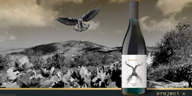 Project X: Τα μπουτίκ κρασιά μπαίνουν στη ζωή μας